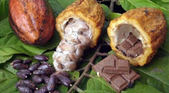 Chocolate El Ceibo