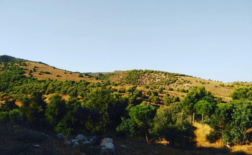 Montes verdes en el agosto malagueño gracias a los pinos